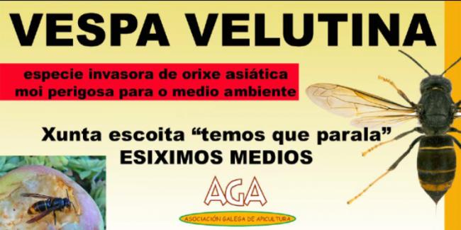 Cartaz concentración Vespa Velutina